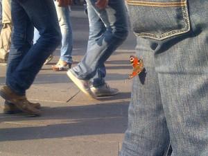 Butterflies loves Italian jeans!